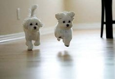 The CUTEST SMALL ANIMALS you have ever seen