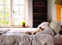 dog guarding bed Trainers who adamantly oppose dogs on the bed often also buy into all the dominance stuff that's been pretty much discredited by behavioral scientists. Dog Growling, Bed Next, Pet News, Dog Feeder, Healthy Pets, Sleeping Dogs, Love Pet, Dog Behavior, Training Your Dog