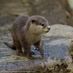 Otters and beavers are my favorite freshwater animals
