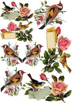 birds and roses Vintage Labels, Vintage Ephemera, Vintage Cards, Vintage Images, Decoupage Vintage, Decoupage Paper, Images Victoriennes, Decoupage Printables, Foto Transfer