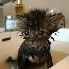 """""""Poop Explosion"""" Makes Kitten Overnight Sensation - We Love Cats and Kittens : """"Poop Explosion"""" Makes Kitten Overnight Sensation - We Love Cats and Kittens Cute Funny Animals, Funny Animal Pictures, Cute Baby Animals, Funny Cats, Cute Cats And Kittens, Baby Cats, Kittens Cutest, Pet Cats, Cool Cat Trees"""