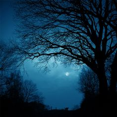 Wonderful Examples Of Nature Photography On the prowl in the Moonlight.On the prowl in the Moonlight. Beautiful Moon, Beautiful World, Beautiful Places, Beautiful Pictures, Trees Beautiful, Summer Trees, Look Dark, Nocturne, Blue Moon