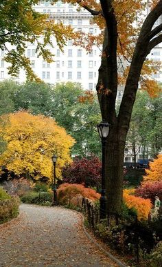 new-york-obsession:  Central Park Near The Pond, NYC
