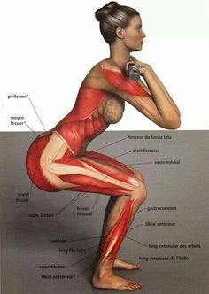 Front Squat musculature