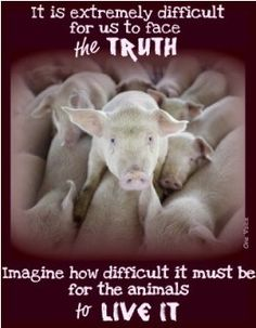 It is difficult to face the truth when you find out where your meat and dairy come from. It is even more difficult to continue to ignore it and do nothing. Go Vegan.