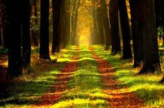 forest-868715_960_720.jpg