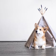 T-shirt, legging, hoodie for Corgi lovers. Order here: https://www.sunfrog.com/JohnyD/corgi
