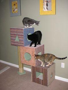 brinquedos para gatos de apartamento - Pesquisa Google