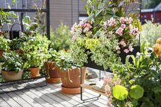 House Plants Decor, Plant Decor, Krusning Ikea, Exterior, Green, Outdoor, Balcony Ideas, Space, Blog