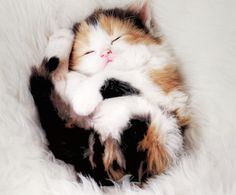 Warm Kitty, Soft Kitty, Little ball of fur... Happy Kitty, Sleepy Kitty... Purr, purr, purr.