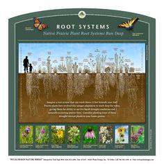 Grade Lesson on Tallgrass Prairie Root Systems Park Signage, Wayfinding Signage, Bog Garden, Rain Garden, Plant Science, Science And Nature, Science Art, Natural Outdoor Playground, Grassland Habitat