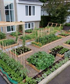Awesome Raised Garden Bed Ideas For Backyard Landscaping - vegetable garden layout - Vegetable Garden Planning, Backyard Vegetable Gardens, Vegetable Garden Design, Vegetables Garden, Fresh Vegetables, Growing Vegetables, Vegetable Ideas, Growing Tomatoes, Small Home Vegetable Garden Ideas