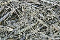 organic textures - Google Search