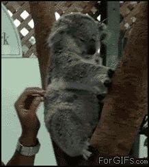 Gif-uri - Gif-uri cu Animale - Pagina - 19 - Gif-uri amuzante, Gif-uri sexy, Gif-uri dragoste, Gif-uri animale, Gif-uri fete