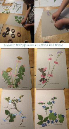 Pressen, trocknen, kleben... fertig ist das kleine Herbarium zum Thema 'essbare Pflanzen aus Wiese und Wald' - oder: Was hätten wir in der Steinzeit gegessen?