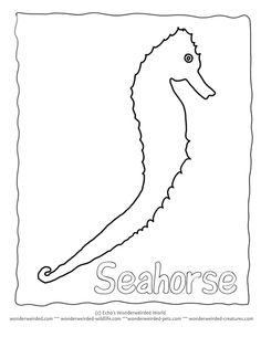 Outline Aquarium Coloring Pages Template  Here A Setup Of An