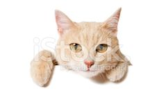 Blank Sign - Funny Cat - Stock image