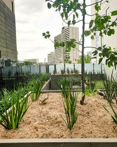 Commercial building projects are often faced with a decision to choose between GRC concrete planters or some form of blockwork or formwork as part of the landscaping for their projects. Roof Gardens, Concrete Planters, Planter Boxes, Commercial, Australia, Landscape, News, Building, Plants