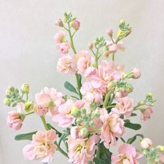 Stock Flower, Floral Wreath, Wreaths, Green, Artist, Flowers, Floral Crown, Door Wreaths, Artists