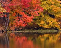 Central Ohio is one of the best places in the US to see gorgeous fall foliage. We sit at the crossroads of the north and south, and we boast tree species from both climate zones, meaning there is a veritable rainbow of fall color throughout October! With comfortable, normally dry weather, this is the perfect [...]