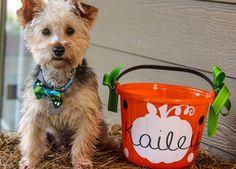 Orange DIY halloween bucket. Pumpkin design. Doodle bear design.