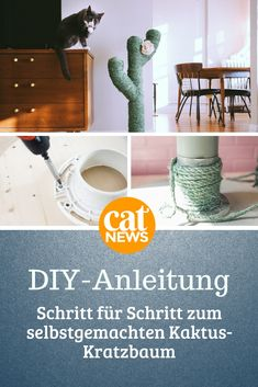 DIY instructions: This cactus scratching post is homemade in no time - Katzen Cactus Pictures, Cactus Craft, Cactus Tattoo, Paint Your House, Shelving Systems, Scratching Post, Cat Wallpaper, Space Cat, Shelf Supports