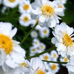 https://flic.kr/p/vdjeey | Gorgeous flowers at Darwin's Down House .. #upsticksandgo #naturephoto #flowers #charlesdarwin #downhouse #michfrost #unitedkingdom #exploring #englishheritage