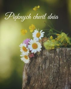 Motto, Good Morning, Dandelion, Flowers, Plants, Nick Vujicic, Night, Polish, Buen Dia