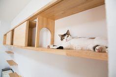 Cat Tree House, Cat House Diy, Cat Jungle Gym, Cat Walkway, Diy Cat Tower, Cat Wall Shelves, Cat Room, Cat Decor, Pet Furniture