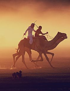 I attended the camel races in Riyadh
