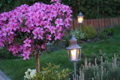 Ważnym elementem zagospodarowania, dzięki któremu ogród staje się atrakcyjny i dostępny nocą jest oświetlenie które rozjaśni mrok, ale też stworzy nastrój wieczornego wypoczynku.   https://www.grindi.pl/content/30,874,Donna.htm