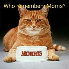 ♡ remember Morris the Cat in the cat food comercials? Best Memories, Childhood Memories, 1970s Childhood, Childhood Toys, Before I Forget, Don't Forget, Son Chat, Music Hits, 80s Kids