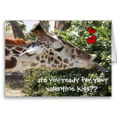Funny Giraffe, ready for your VALENTINE kiss??