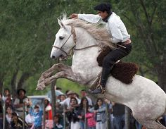 A gaucho rides an untamed horse during Tradition Day celebrations in San Antonio de Areco, Argentina