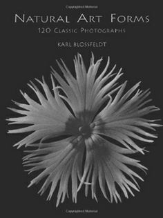 Natural Art Forms by Karl Blossfeldt (Out of Print)