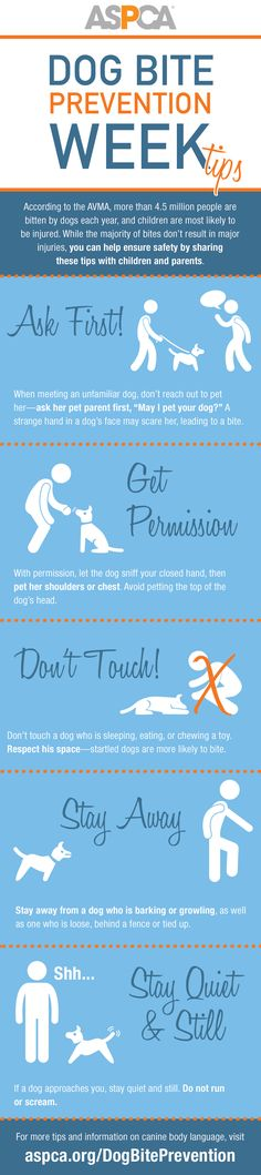 According to the AVMA, more than 4.5 million people are bitten by dogs in the United States every year, and at least half of the 800,000 people who receive medical care for dog bites each year are children. To reduce the number of these injuries, adults and children should be educated about bite prevention, and dog owners should practice responsible dog guardianship.