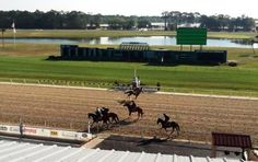 The Tampa Bay Downs oval: where quality Thoroughbreds congregate.