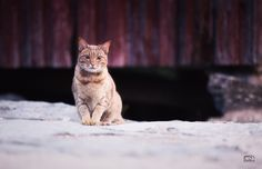 Cat by night in Swedish coastal Village  by Bildbrus.se on YouPic