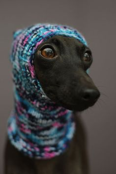"Knitted hats for dogs from ""Vinthunden"" Poor dog looks miserable. Funny Dogs, Funny Animals, Cute Animals, I Love Dogs, Cute Dogs, Poor Dog, Dachshund, Grey Hound Dog, Whippets"