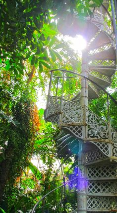 I get so much inspiration from visiting botanical gardens.this one in Copenhagen had me dreaming of a spiral staircase surrounded by overgrown fiddle leaf fig trees and money trees! Beautiful World, Beautiful Gardens, Beautiful Places, Fiddle Leaf Fig Tree, Money Trees, Photos Voyages, Stairway To Heaven, Copenhagen Denmark, Parcs
