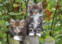 I might just give the kiss of life to our stupid cat, but I draw the line at tortoises I Love Cats, Cute Cats, Funny Cats, Maine Coon, Stupid Cat, Beautiful Kittens, Beautiful Birds, Cool Pets, Christmas Humor