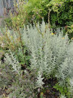 Garden Landscaping, Perennials, Entrance, Seeds, Yard, Cottage, Breezeway, Landscape, Flowers