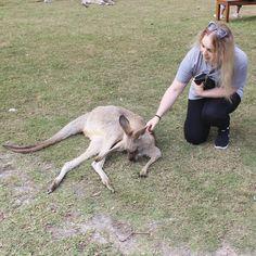 I made a new friend  #kangaroo #australia #currumbinwildlifesanctuary #currumbin by kayla__watts http://ift.tt/1X9mXhV