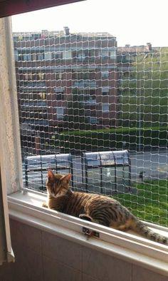 Recinzione per finestra antifuga