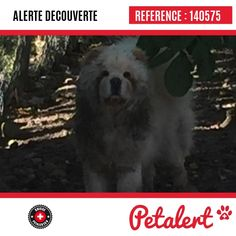 Cette Alerte (140575) est désormais close : elle n'est donc plus visible sur la plate-forme Petalert Suisse. L'émetteur de cette Alerte ne s'est plus manifesté, malgré nos relances. Merci pour votre aide. Visible, Aide, Dogs, Animals, Switzerland, Thanks, Shape, Dog, Animales