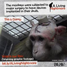Our new investigation reveals the horrifying reality of life for monkeys inside one German laboratory.  Please support us by sharing this far and wide to help stop this suffering.  Find out all the ways you can help and take action at http://www.buav.org/undercover-investigations/a-living-nightmare