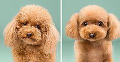 Regardez donc à quel point ces chiens sont métamorphosés après une simple séance de toilettage pourtant indispensable