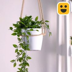 Diy Crafts Hacks, Diy Home Crafts, Rope Crafts, House Plants Decor, Plant Decor, Home Plants, Hanging Plants, Plants Indoor, Hanging Herb Gardens