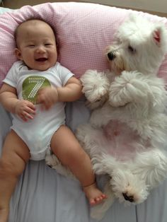 Nothing better than a cute baby and a westie!