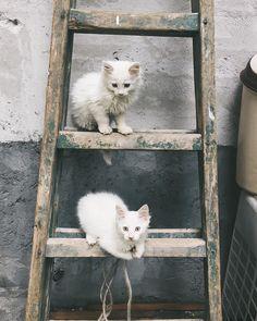 Two little kittens climbing up a ladder http://ift.tt/2eIBxNq